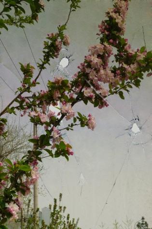 March - He Garden三月的片石山房