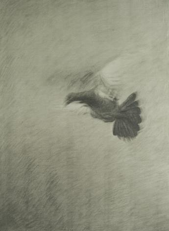 Pigeon鸽子, 2012