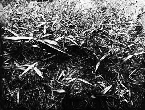 New Bamboos 新竹