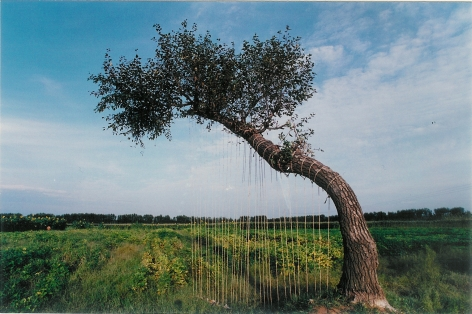 Harpæ'琴1995Color photographå½©è‰²ç…§ç‰‡47 1/4 x 71 in (120 x 180 cm)Edition of 12 (12版)