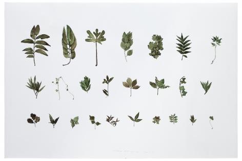 Plant No. 7æœ¨7, 2011