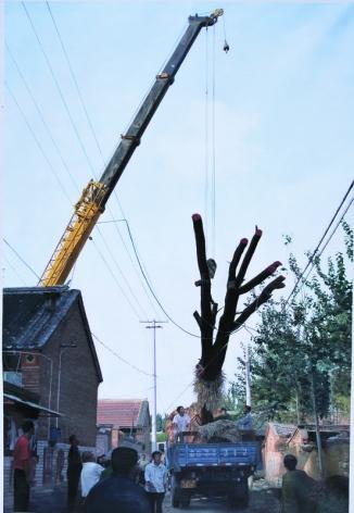 A Hundred Year Old Tree Blooms Again No.4ç™¾å¹´è€æ'再长一遍 No.4, 2008