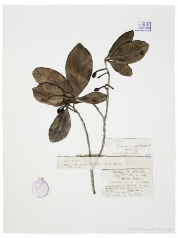 Guo Hongwei 郭鸿蔚(b. 1982), Plant No. 6收集者- 木