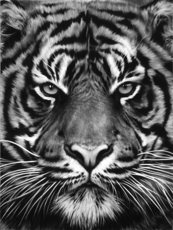 Untitled (Tiger Head, No. 8), 2012.