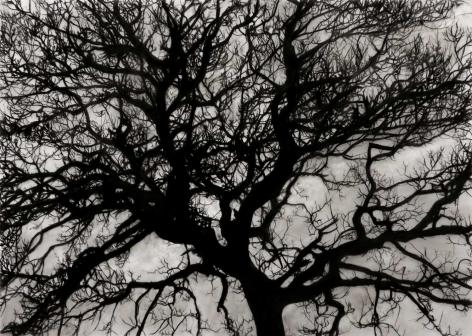 Robert Longo, Study of Tree November, 2017.