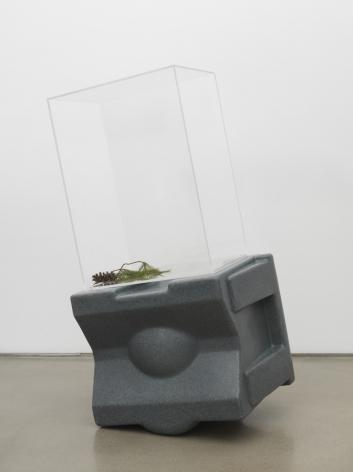 Untitled, 2018. HDPE, Plexiglas box, Pine cone, Pine needles,