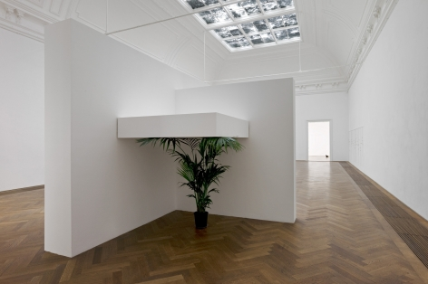 """Untitled, 2012. Plant (any species of banana or palm), Wood, Dimensions variable (contingent on corner with install), Plant should be approx 170 cm tall but """"suppressed"""" by shelf above. Installation view, 2012. Kunsthalle Basel."""