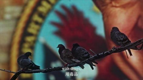 Cheng Ran The Homing Pigeon, 2016