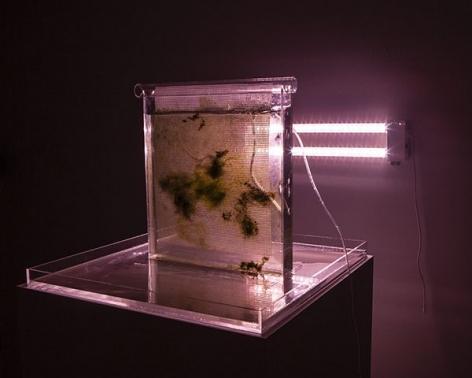 Arden Surdam sculpture 'Scrubber (Bioreactor III)'