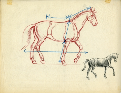 Corrected version of the Mark Shaw drawing of a horse