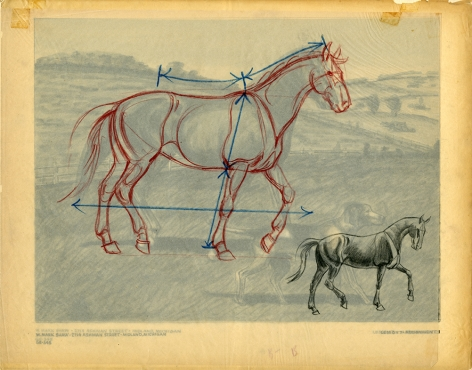 Mark Shaw drawing of a horse with corrections