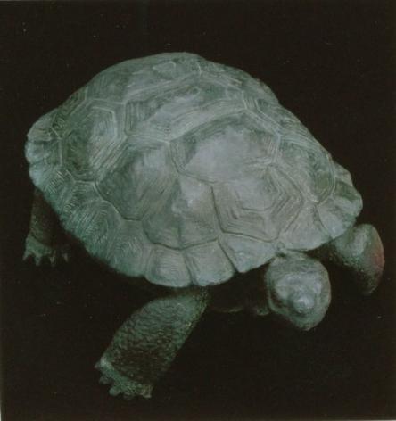 mark rossi tortoise female