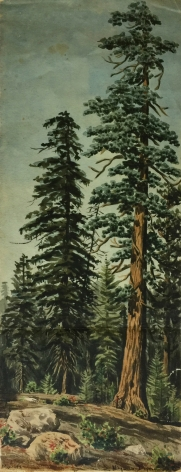 MAYNARD DIXON REDWOODS CALIFORNIA WATERCOLOR1890s EARLY