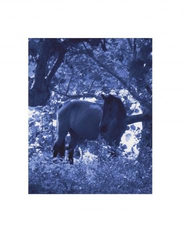 P5 1447 (gloss/blue), ©2005