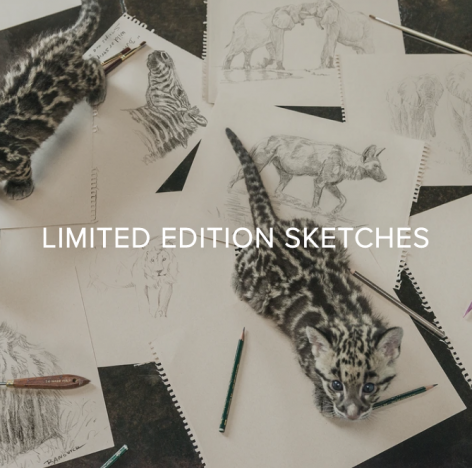 YOU GIVE BACK WHEN YOU COLLECT BANOVICH WILD ACCENTS - SHOP LIMITED EDITION SKETCHES