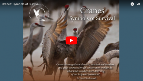 George Archibald, PhD.-Cranes: Symbols of Survival
