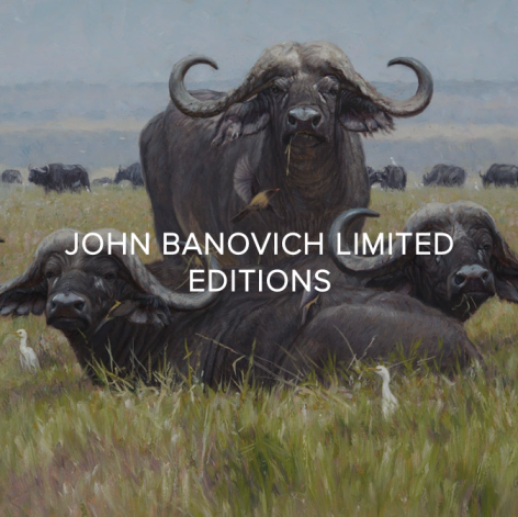 You GIVE BACK when you collect Banovich Wild Accents - SHOP LIMITED EDITION GICLEES