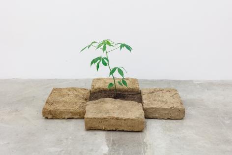 Group Show with Commonwealth and Council: Rafa Esparza and Beatriz Cortez, Portal (2018). Adobe, ceiba tree, 18 x 31 x 41 inches (45.7 x 78.7 x 104.1)