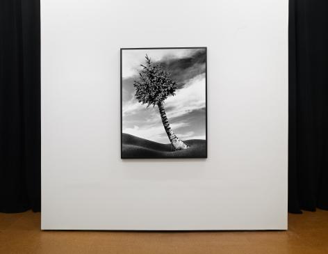 The Fir-Palm,1991/2012 Lorraine O'Grady: New Worlds,Installation view, Alexander Gray Associates, 2012