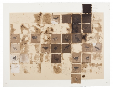 Clados, 2013 Transfer, oil, ink, pastel and rice paper on cardboard