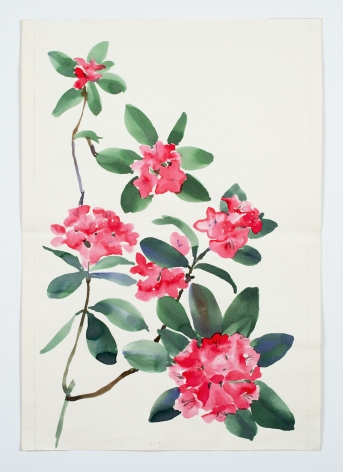 "Rhododendron, from the ""Florals"" series, c. 1984, Watercolor on paper"
