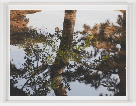 SPENCER FINCH Reflection Study (Kenrokuen), 2017