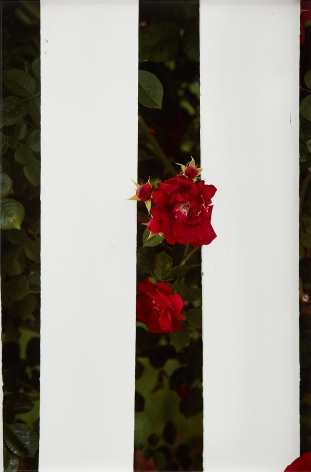 Roe Ethridge Picket Fence II, 2017