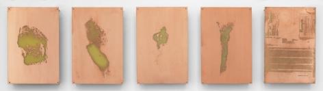Body Print (Popliteal Fossa, Left Antebrachium, Right Antebrachium, Right Carpal and Attending Soft Tissues, Fluticasone Prop 50 mcg Spray)