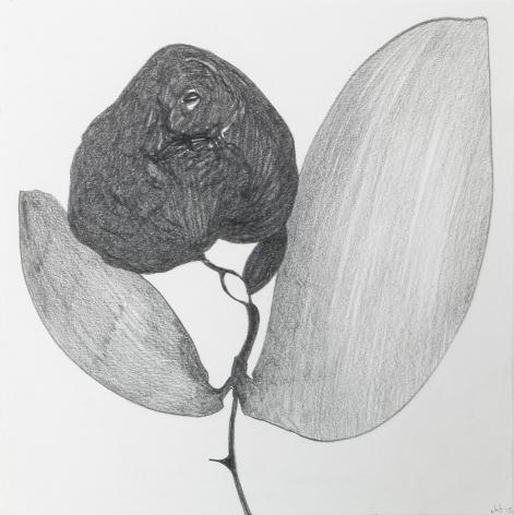 Nicola Tyson, Stoned Rose