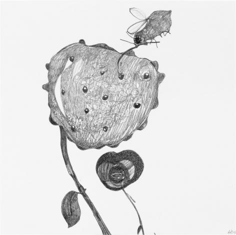 Nectar 2015 Graphite on paper