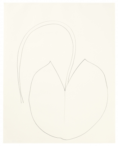 Ellsworth Kelly, Water lily