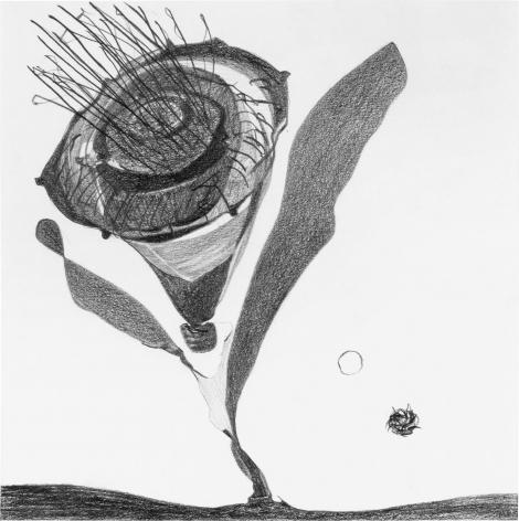 Pollen 2015 Graphite on paper