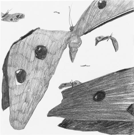 Hefty butterflies begin their migration