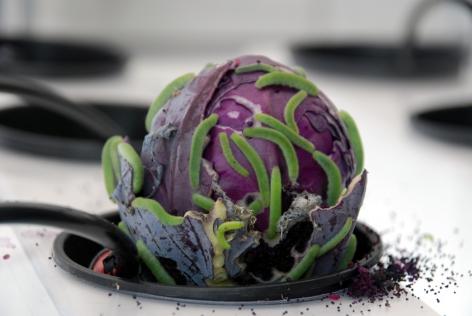 Pieris Rapae Larvae on Cabbage,Studio View, Paradigm, Long Island City, NY 2014