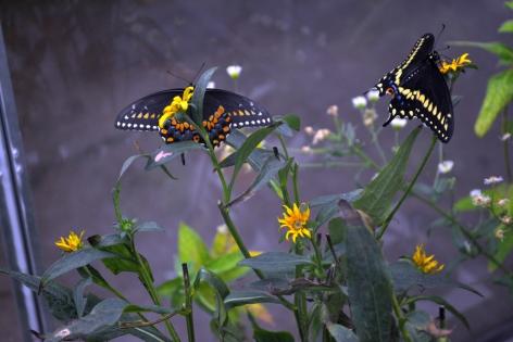 Paul Villinski, Butterfly Machine, detail, 2014