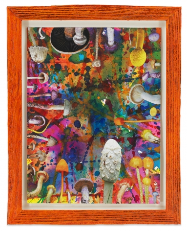 Untitled (SHRooMS orange frame), 2020, Watercolor and collage on paper with artist frame (reclaimed wood), 14 1/2 x 11 1/2 inches, 36.8 x 29.2 cm, MMG#32890