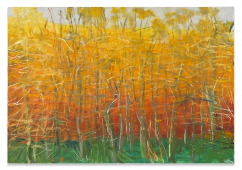 Maple Trees in Fall, 2008, Oil on canvas, 36 x 52 inches, 91.4 x 132.1 cm,MMG#31413