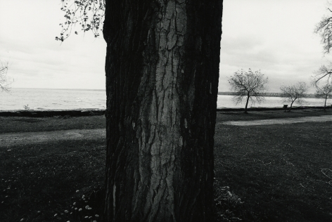 Tree, Seneca Lake, 1973