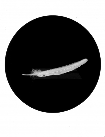 Feather, from the Paradise Series, 1993