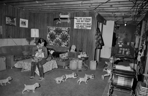 Family with Spaniel Puppies, Milan, New Hampshire, 1980