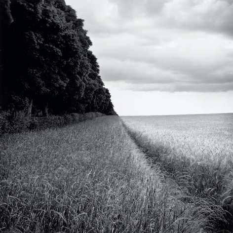 Ammer, from the series Farmed, 2009