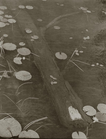 Wood and Water Lily, 1998