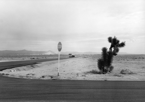 Yucca and Stop Sign, Nevada, 1982