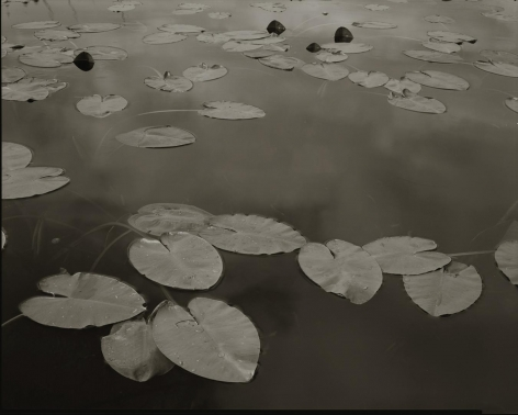 Floating Leaves II, Boundary Water, MN, 1999