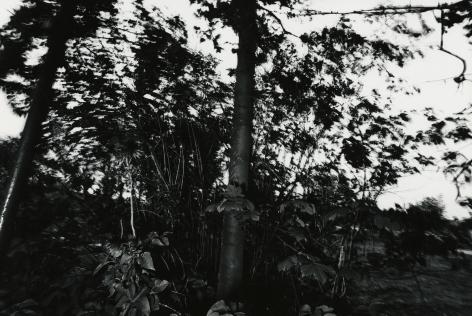 Tree, Rochester, N.Y., 1973