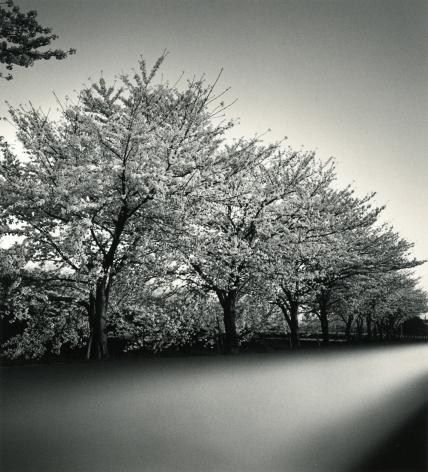 Cherry Blossoms, Nara, Honshu, Japan, 2002