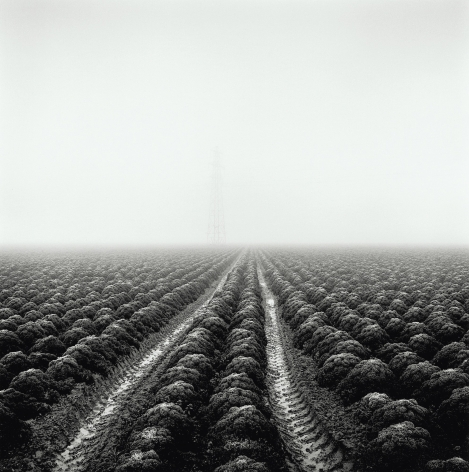 Station Farm, from the series Drained, 2017