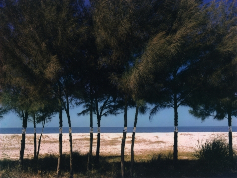 Australian Pines, Fort DeSoto, Florida, 1977