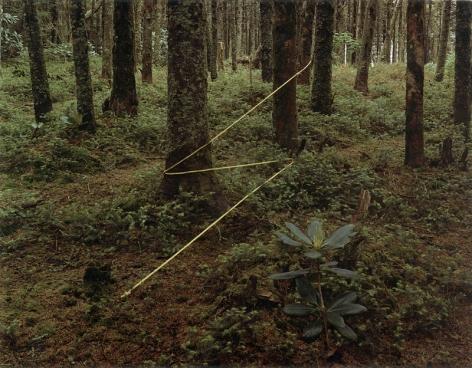 Roan Mounting Lightning, Roan Mountain, North Carolina, 1977