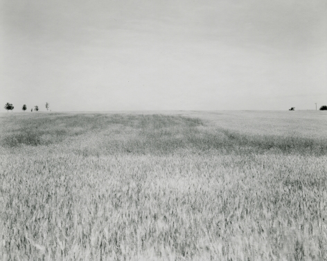 Untitled, fromIllinios Landscapes, 1980, gelatin silver contact print, 8 x 10 inches